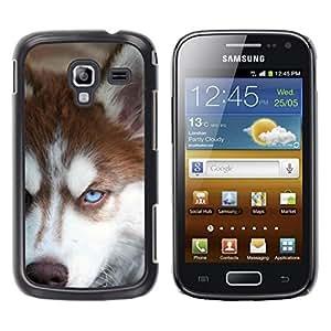 Be Good Phone Accessory // Dura Cáscara cubierta Protectora Caso Carcasa Funda de Protección para Samsung Galaxy Ace 2 I8160 Ace II X S7560M // Siberian Husky Alaskan Malamute Dog