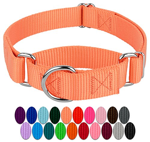 Pictures of Country Brook Design | Martingale Heavyduty Nylon Dog 1