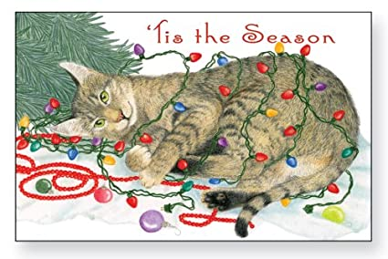 decorating cat christmas cards