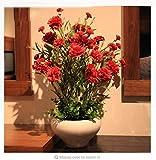 fino shop Elegant 300 PCS Big Red Carnation Seeds Perennial flowers Potted Garden Plants Seeds Dianthus Caryophyllus Flower Seeds