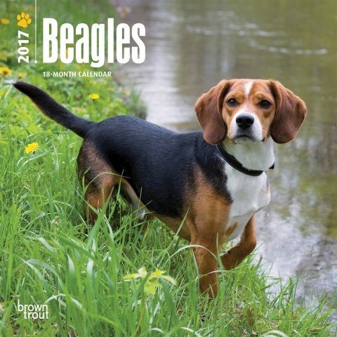 "Beagles 2017 Mini Calendar 7"" x 7"""