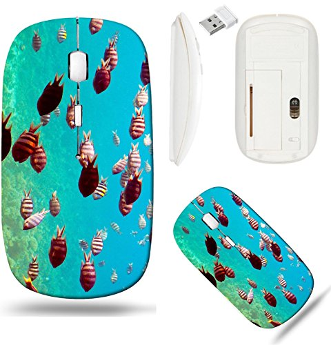 Liili Wireless Mouse White Base Travel 2.4G Wireless Mice with USB Receiver, Click with 1000 DPI for notebook, pc, laptop, computer, mac book Photo of tropical fishes at coral reef area IMAG 112 Coral