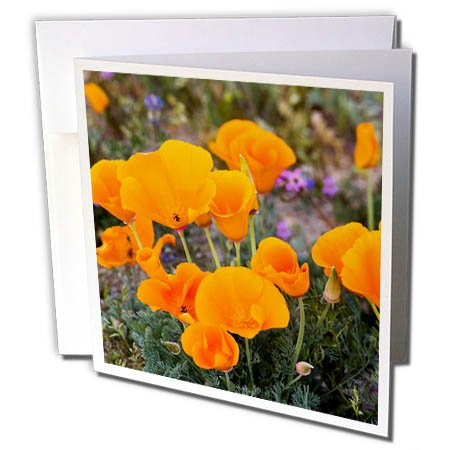 3dRose Danita Delimont - Flowers - California, Antelope Valley. California Poppies Blooming in Spring - 6 Greeting Cards with envelopes (gc_258919_1)