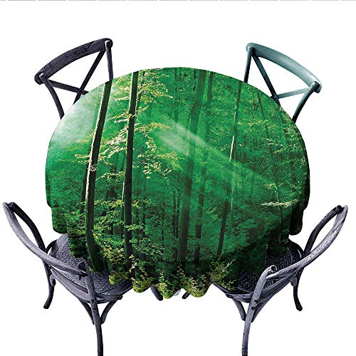 Farm House Decor Customized Round Tablecloth Sunlight Bursting into The Forest Trees Foliage Misty Morning Serenity Picture Waterproof Circle Tablecloths (Round, 60 Inch, Green White)