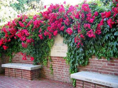 - Heirloom 300 Climbing Rose Seeds Climber Fire Red Perennials Flower Bulk Seeds B3100
