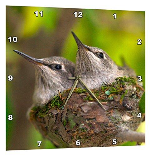 3dRose California Lakeside Baby Hummingbirds