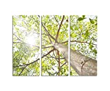130 x 90 cm – Stretcher Frame Tree Frog Perspective Sunshine Light 3-piece Wall Picture on canvas and stretcher frame photo Fine Art Print Art Print
