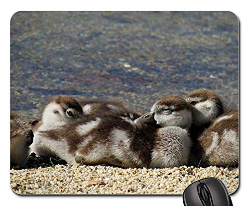 Mouse Pad - NilgAnse Geese Chicks Egyptian Goose Chick Bird -