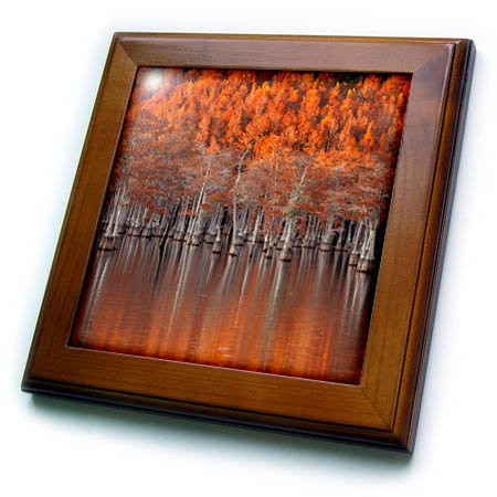 - 3dRose Danita Delimont - Autumn - USA, Georgia, Twin City, Cypress trees in the fall at sunset. - 8x8 Framed Tile (ft_278906_1)