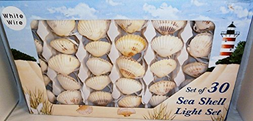 Shell Outdoor Lights in Florida - 3