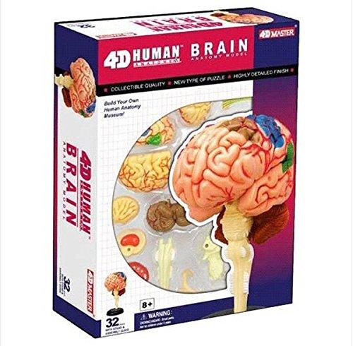 4d Puzzle Brain Human Anatomy Study Series 3d Model New Buy Online