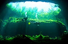 Two scuba divers in the cenote system on the Yucatan Peninsula of Mexico is a licensed reproduction that was printed on Premium Heavy Stock Paper which captures all of the vivid colors and details of the original. The overall paper size is 17...