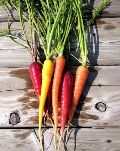 Organic Rainbow Blend Carrot 150 Seeds Heirloom Non-gmo Rare Healthy Flavorful