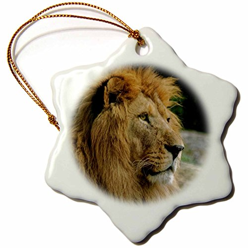 3dRose Portrait of African Wildlife Lion Animal Style Snowflake Ornament, 3'' by 3dRose
