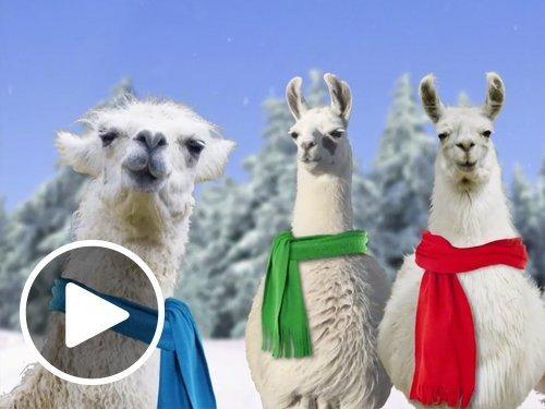 Animated Fa La La Llamas eGift Card