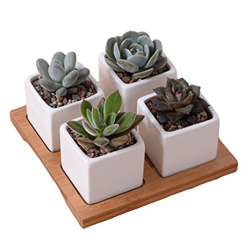 ROSE CREATE 4 Pcs 2.0 Inches Mini Ceramic Succulent Plant Pots with Pot Saucers, Thumb Bonsai Pots with Hole - Pack of 4