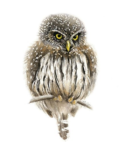 Pygmy Owl Watercolor Giclee Print
