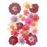 Alacos Hand Made Pressed Flowers for Face Body Makeup Dry Flowers for Art Use (Summer Flowers)