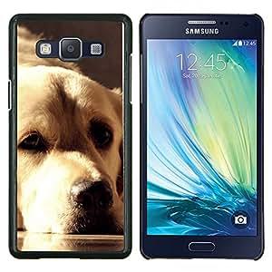 Golden Retriever Labrador Dog Face Sunlight- Metal de aluminio y de plástico duro Caja del teléfono - Negro - Samsung Galaxy A5 / SM-A500