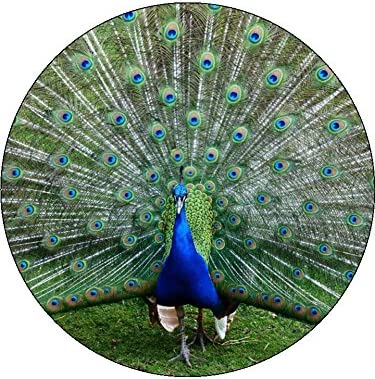 Superb 7 5 Inch Peacock Birthday Cake Toppers Decorations On Edible Rice Personalised Birthday Cards Veneteletsinfo