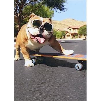 Resultado de imagen para bulldog sunglasses