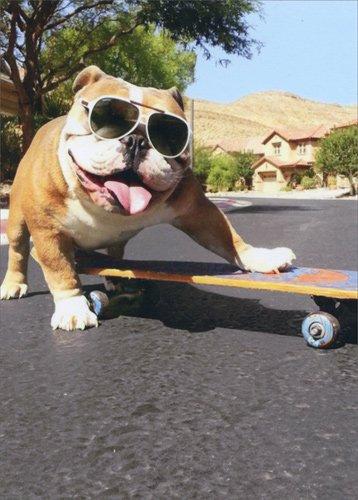 Amazon Bulldogsunglassesskateboard Avanti Funny Dog