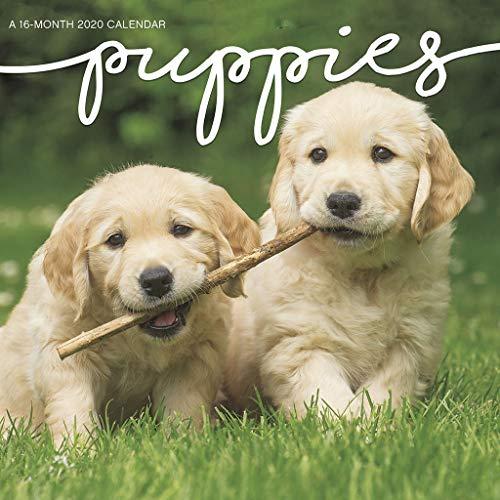 - Puppies 2020 Mini Calendar