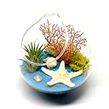 Cheap Pixie Glare Hanging Terrarium Ocean Scene with Live Air Plant, Sea Fan, Starfish & More (Blue Teris)
