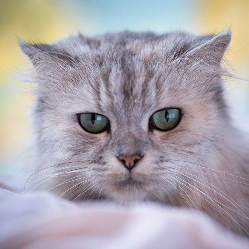 Pet Head Inc Blueberry Muffin Dry Clean Cat Shampoo Spray