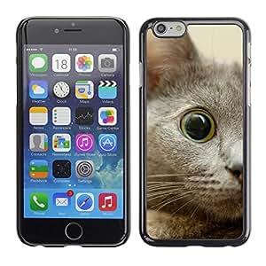 TopCaseStore / la caja del caucho duro de la cubierta de protección de la piel - Nebelung Kitten Eye Cat Russian Blue - Apple iPhone 6 Plus 5.5