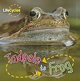 Tadpole to Frog, Camilla De la Bédoyère, 1926853415