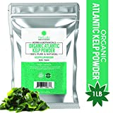 Organic Kelp Powder 1 Pound, Wholefood Dietary Supplement, Raw Sun-Dried Kelp Seaweed from Canada, 100% Pure, Non-GMO, Gluten-Free & Kosher
