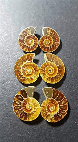 144ct Ammonite and Ammolite Lot of 6 Cut and Polished Slices Fossil Specimens. Wire Wrapping and Jewelry Making Fossil Gemstones. - Amber Fossil Jewelry