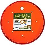 Bloem Living T6321 Up's a Daisy Planter Insert, 11-Inch, Orange