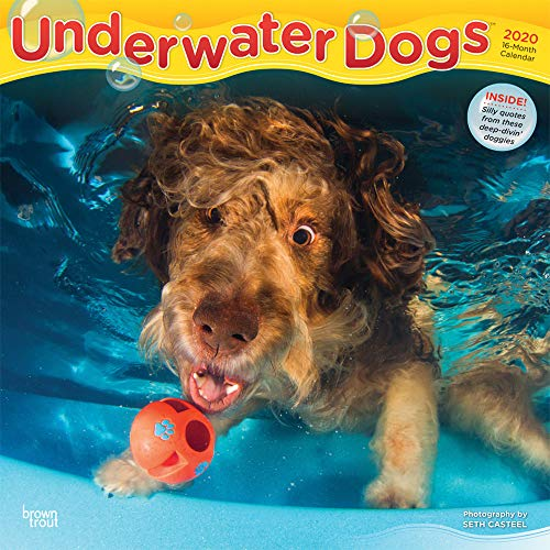 Underwater Dogs 2020 12 x 12 Inch Monthly Square Wall Calendar, Pet Humor Puppy (English, French and Spanish Edition)