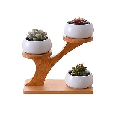 Succulent Flower Pot,FOME HOME 3pcs White Oblate Ceramic Pots with 3 Tier Bamboo Saucers Stand Holder Decorative Succulent Plant Pot Cactus Plant Pot Flower Pots Indoor for Office Garden Desk Home: Garden & Outdoor