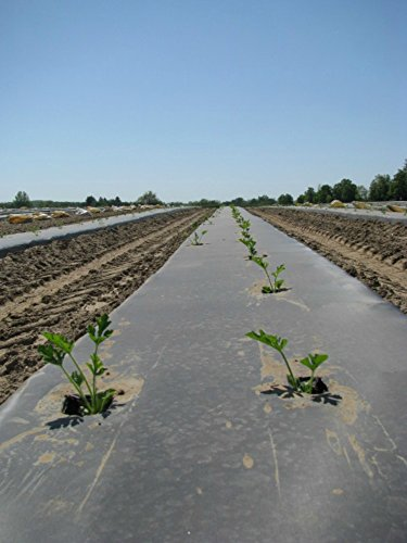 Black Eco-One OXO - Degradable Mulch Film - 4 ft. X 100 ft. - .5 Mil Thick - By Growers's Solution (Weed Control Film)