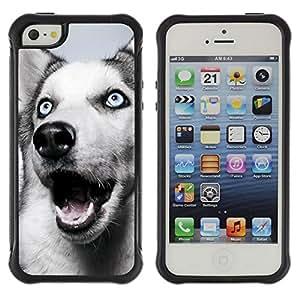 Paccase / Suave TPU GEL Caso Carcasa de Protección Funda para - Siberian Husky Blue Eyes Dog White - Apple Iphone 5 / 5S