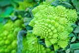 100 Romanesco Italia Heirloom Broccoli Seeds - Broccoflower, Roman Cauliflower, Fractal Broccoli, Broccolo Romanesco, Romanesque Cauliflower - by RDR Seeds