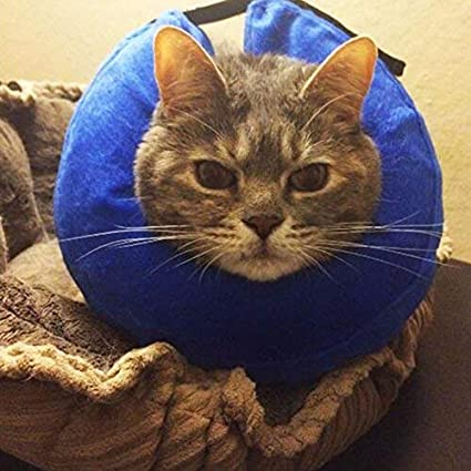 DAYNECETY 1pc Cats Dogs Recovery Collar Pet Neck Cover Protector Anti-bite Ring Circle Pet Head Cover Basic Collar Car Travel Accessories for Dogs Small Medium Large