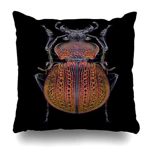 Ahawoso Throw Pillow Cover Square 20x20 Black Antenna Beetle Carabus Armeniacus On Ornamental Nature Arthropod Biology Bright Bug Design Entomology Zippered Cushion Case Home Decor - Beetle Pillow