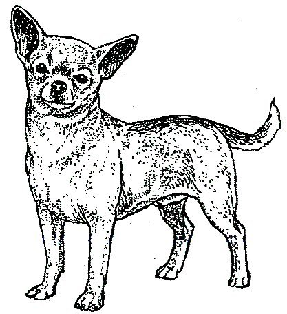 Dog Rubber Stamps - Chihuahua-5E Size: 2