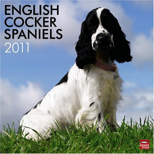 (English Cocker Spaniels (Intl) 2011 Square 12X12 )