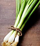 Evergreen Bunching Onions Seeds - Hardy Heirloom Scallions - Non-GMO 1,000 Seeds
