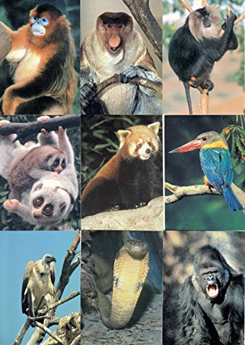SAN DIEGO ZOO 1993 CARDZ COMPLETE BASE CARD SET OF 110 ANIMALS
