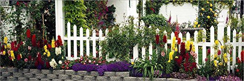 Flowers and Picket Fence in a Garden, La Jolla, San Diego, California, USA by Panoramic Images Laminated Art Print, 51 x 17 inches