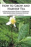 How to Grow and Harvest Tea: A Comprehensive