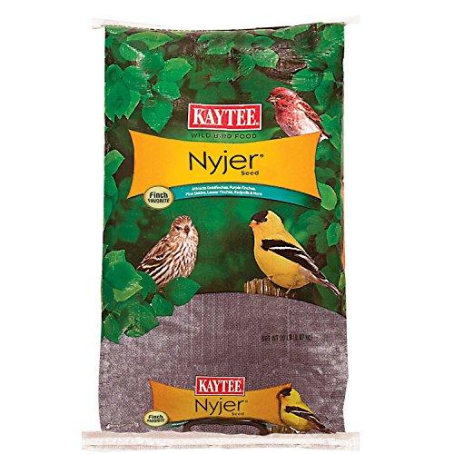 Kaytee Nyjer