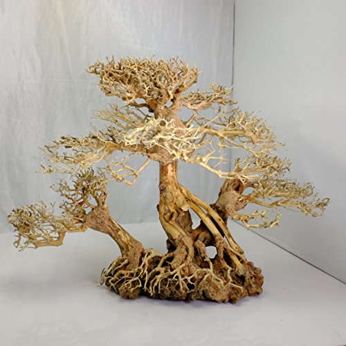 Aquarium moss tree - Bonsai Driftwood on rock - BLS - 12 inches tall by Bonsai Driftwood