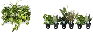Ortisgreen Hang Oasi Home Indoor Vertical Garden with Costa Farms Live House Plant Collection 6-Pack, Assorted, 4-Inch